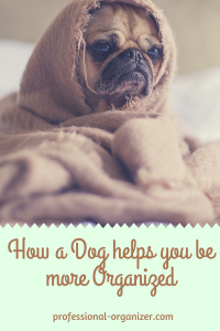 dog helps you be more organized